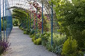 Rose-trees on arbour at Jardins fruitiers de Laquenexy ; Le tunnel des courges<br>Rose-trees 'François Gillot' and 'American Pillar'