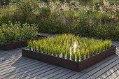 Rice at Jardins fruitiers de Laquenexy ; Le potager d'un curieux