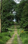Path Tronçais forest - Limousin France