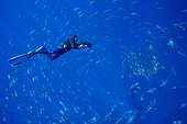 Diver and school of young bluefin tuna - Azores