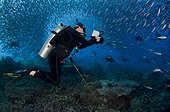 Diver Schooling Fusiliers and Trevally - Komodo Indonesia ; Hard to Find Rock or Castle Rock