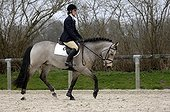 Working trot in a dressage exercise - France