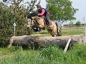 New Forest pony jumping an obstacle trunk Cross - France