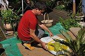 "Plantation in ""jardisac"" on a garden terrace"