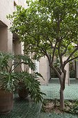 Philodendron and orange tree in a patio in Morocco ; Landscapers: Ossart and Maurières