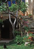 Fig tree and pelargoniums on a stair