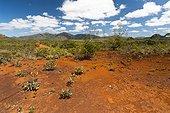 Maquis minier de la Plaine des Lacs - Nouvelle-Calédonie