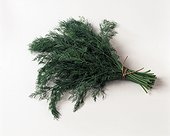 Bouquet of dill