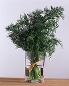 Bouquet of dill in a vase