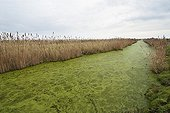 Channel in the swamp - Charente-Maritime France