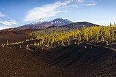 Caldera Landscape of Teide National Park - Tenerife Spain