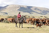 Gaucho and herd of cows - Torres del Paine Chile