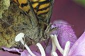 Portrait of Butterfly on flower - France