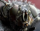 Portrait of Fly - France
