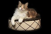 Cat lying on a cushion on a black background