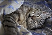 Portrait of cat sleeping on bed