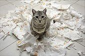 Chat and household paper shredded
