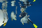 Diver and Circular spadefish - Papua New Guinea
