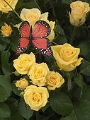 Cardboard butterfly placed over a group of yellow roses