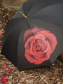 Rose decorated umbrella on the ground