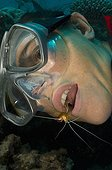 White-banded Cleaner Shrimp on Diver's mouth - New Caledonia