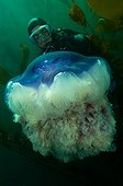 Giant jellyfish and diver - New Zealand