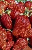 Strawberry 'Gariguette'