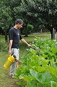 Spraying of milk based treatment in the garden