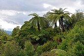 Waimangu Volcanic Valley - North Island New Zealand  ; Waimangu Volcanic Rift Valley