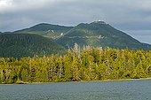 Coniferous Forest - Pacific Rim BC Canada