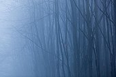 Morning mist in Chestnut - Rhône-Alpes France