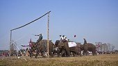 Elephants playing football - Elephant festival Chitwan Nepal