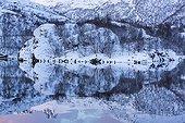 Grey Heron on the shore - Sildpollen Lofoten Norway