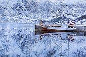 Dockside - Sildpollen Lofoten Norway