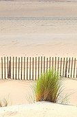 Marram and ganivelle fight against dune erosion - France