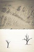 Acacia dead and dune  - Dead Vlei Namibia Namib-Naukluft