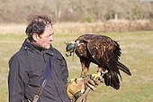 Falconer and Golden eagle in winter - Sologne France
