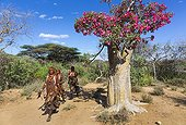 Hamer woman and flowering tree - Omo valley Ethiopia
