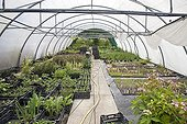 Perennials in a nursery