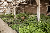 Shade loving plants and multiplication greenhouse in nursery