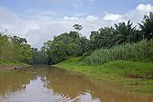 Oil palm plantation - Sabah Borneo Malaysia