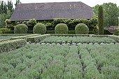 Lavenders at Château de Losse gardens