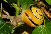 Snail garden - France