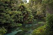 Blue spring landscape - Te Waihou walkway New Zealand