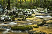 Sunset reflected a golden color in smoky mountain creek -USA