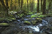 Creek flows through the forest - USA