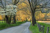 Flowering trees and road in Cades Cove - Smoky Mountains USA