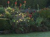Tritoma 'Alcazar' and common evening primroses