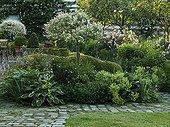 Dappled willow 'Hakuro Nishiki' and alchemilla in a garden