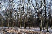 Bois de Vincennes in winter
